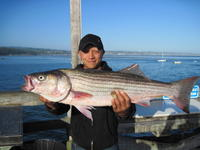 Angler and striped bass