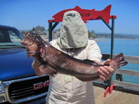 Stenographer and lingcod