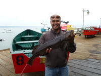 Feddy and lingcod