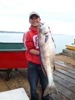 tuk and white sea bass