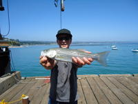 Capitola: Joey's first of the year.