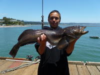 Capitola: Dale with a big ling.