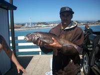 Santa Cruz: 38 inch ling