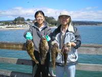 Joe Kegi and limit of grass cod