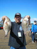 Amado and barred perch