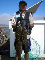 Feng and ling and grass cod