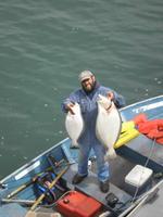 Rui and halibuts